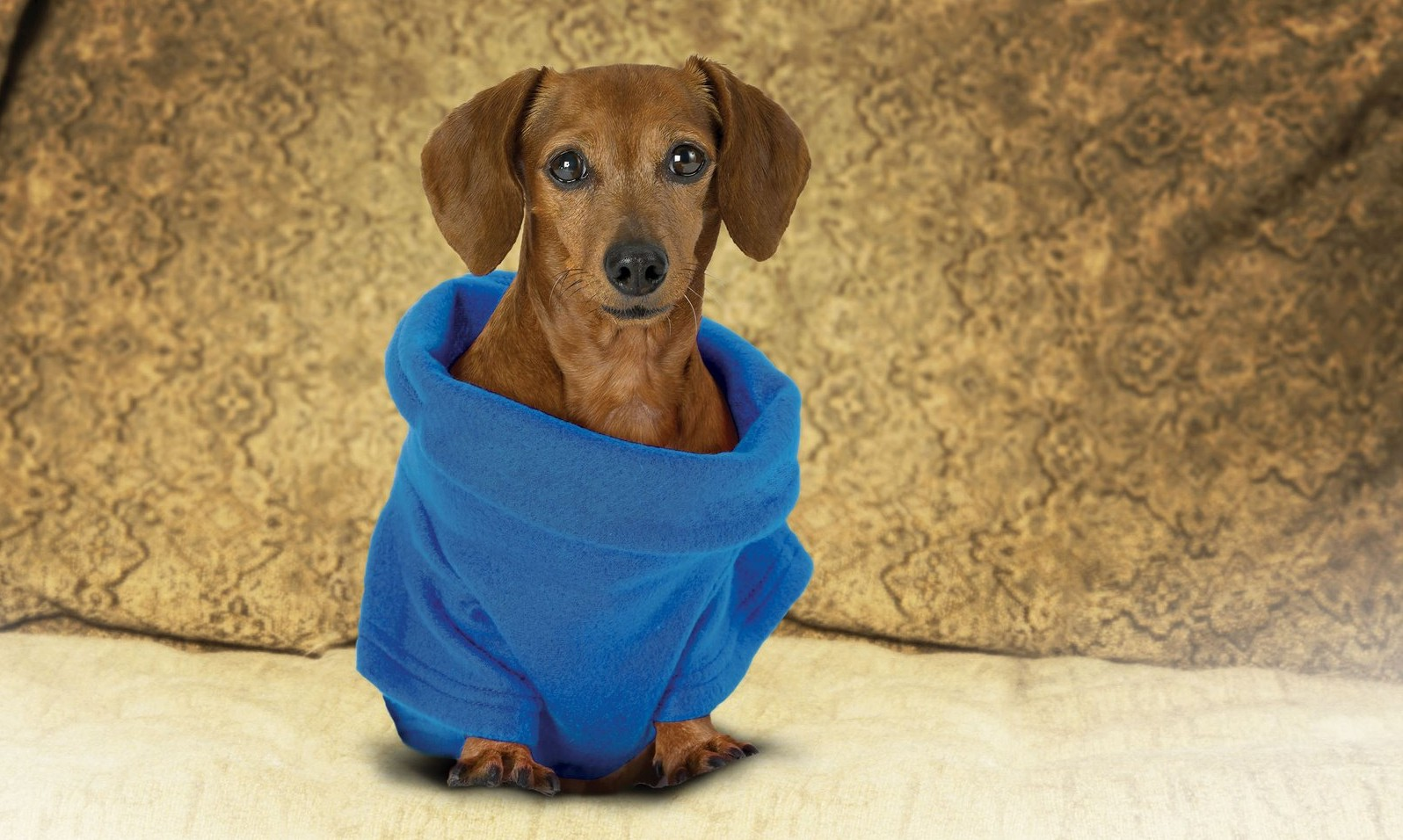 The Snuggie for Dogs fleece blanket coat in blue. (PRNewsFoto/Allstar Products Group, LLC)